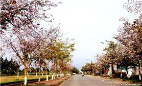 Lai Châu mùa hoa ban nở