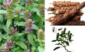 Công dụng chữa bệnh của cây thảo dược Hạ khô thảo