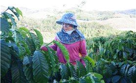 Thoát nghèo nhờ linh hoạt chuyển đổi cây trồng, vật nuôi