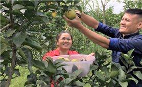 Tuyên Quang: Nâng cao hiệu quả sản xuất nông nghiệp thông qua các mô hình liên kết