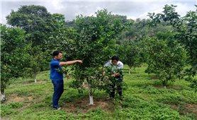 Xây dựng thương hiệu nông sản từ giống cây trồng, vật nuôi bản địa