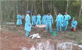 Dịch tả lợn Châu Phi xuất hiện trở lại ở vùng biên Quảng Trị