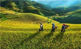 Kiện toàn Ban Chỉ đạo Trung ương Chương trình mục tiêu quốc gia phát triển kinh tế - xã hội vùng đồng bào DTTS và miền núi