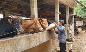 Ông Già Sìa Pó làm giàu từ chăn nuôi gia súc theo hướng hàng hóa