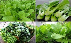 Tháng 5 trồng rau gì?