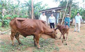 Tập trung phòng, chống dịch bệnh trên cây trồng, vật nuôi