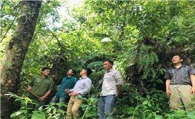 Hiệu quả thiết thực từ Dự án Quản lý rừng bền vững tại Tam Đường