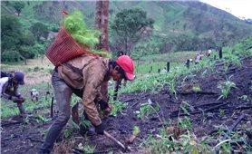 Đề xuất chính sách trợ cấp gạo trồng rừng thay thế nương rẫy