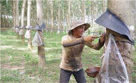 Trưởng thôn A Mão - Tấm gương sáng của người dân làng Rắc