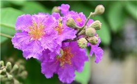 Tháng năm - Hà Nội phố rực rỡ màu hoa