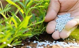 Cách giải độc cho cây khi bị ngộ độc phân bón, thuốc bảo vệ thực vật