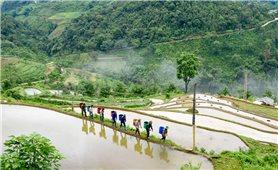 Hồng Thái mùa nước đổ