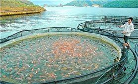 Cách quản lý môi trường nuôi thủy sản trong mùa mưa bão