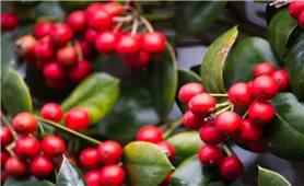 Giá cà phê hôm nay 26/7: Cà phê trong nước đi ngang