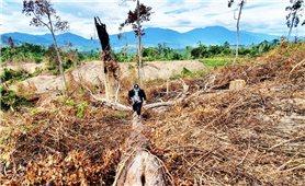 Rừng tự nhiên giáp ranh Phước Sơn - Hiệp Đức bị tàn phá