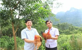 Thả bạt ngàn gà trên đồi, anh nông dân người Nùng có tiền tỷ thu về