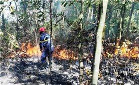 Giai đoạn 2021 - 2025, TP. Đà Nẵng phục hồi 2.000ha rừng