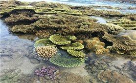 Người dân chung sức bảo vệ bãi san hô cổ