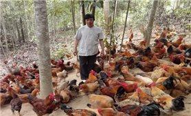 Ba Vì (Hà Nội): Phát triển chăn nuôi, sản xuất nông nghiệp an toàn theo hướng hữu cơ