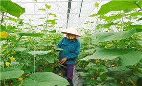Nhiều dấu ấn trong phong trào HTX khởi nghiệp ở Bắc Giang