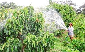 Giải pháp rửa mặn cho cây trồng bị hạn mặn