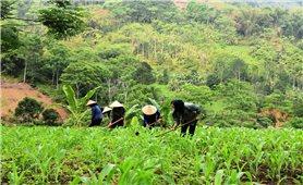 Sản xuất nông nghiệp ở miền núi trước biến đổi khí hậu: Gánh nặng trong sản xuất (Bài 2)