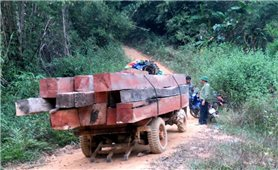 Đắk Lắk: Huyện Ea Kar phát hiện, xử lý 64 vụ vi phạm Luật Lâm nghiệp