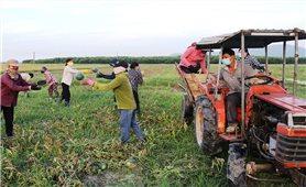 Dương Đình Lợi - Người bắt đất hoang đẻ ra tiền