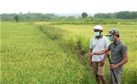 Huyện Sông Hinh (Phú Yên): Nhiều chính sách hỗ trợ giúp người dân ổn định cuộc sống