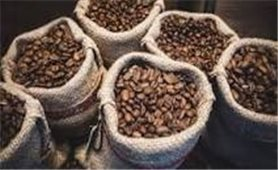 Giá cà phê hôm nay 28/9: Trong mức 39.400 - 40.300 đồng/kg