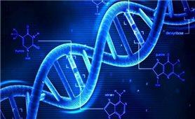 Phát hiện sớm bệnh tim mạch di truyền qua gene