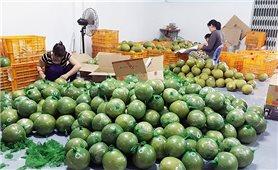 Đặc sản bưởi da xanh, chôm chôm… miền Tây giảm 40-50%, giá chỉ từ 6.000/kg