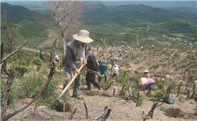 Phú Yên: Tái cơ cấu lâm nghiệp theo hướng bền vững