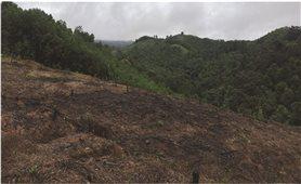 Người dân huyện Con Cuông (Nghệ An) bán đất rừng trái phép: Vai trò của chính quyền ở đâu?