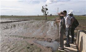Gia Lai: Nước thải nhà máy mì gây ô nhiễm nghiêm trọng