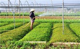 Đà Nẵng: Miễn phí thủy lợi cho gần 6.000ha đất nông nghiệp và nuôi trồng thủy sản