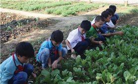 Giáo dục mầm non ở vùng cao lào cai: Khó khăn nhân đôi