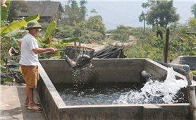 Dư lượng chất cấm trong cá nước lạnh ở Lào Cai: Bài học cho sự buông lỏng quản lý