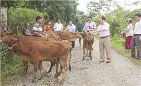 Hỗ trợ bò giống cho đồng bào DTTS nghèo ở Nghệ An: Nhiều ý nghĩa từ một chương trình
