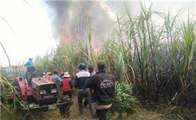 Liên tục cháy vườn mía tại huyện Ea Súp