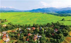 Xây dựng mô hình cánh đồng lớn ở Điện Biên: Bước đột phá trong tái cơ cấu nông nghiệp