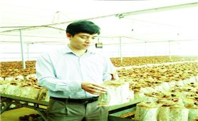 Dễ như trồng nấm linh chi