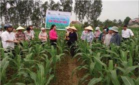 Ứng dụng khoa học công nghệ vào nông nghiệp: Nền tảng của sự phát triển bền vững