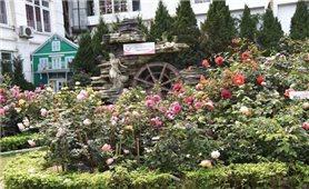 Lễ hội Hoa hồng Thắm tình hữu nghị