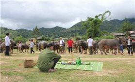 Lễ cúng vía trâu của người Thái