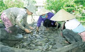 Nhiều giải pháp giúp đồng bào Khmer thoát nghèo