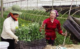 Hoa nở trên đất cằn Chiềng Xôm
