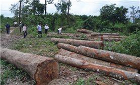 Lạm dụng chính sách tận thu gỗ rừng thiệt hại sau bão