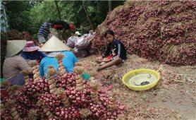 Công nghệ bảo quản nông sản sau thu hoạch: Giảm rủi ro, tăng giá trị