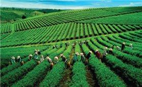 Đường băng nào cho du lịch nông nghiệp?